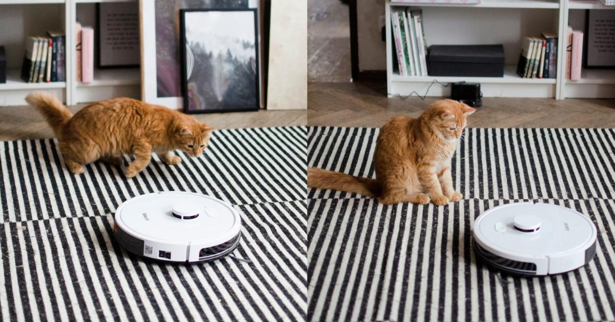 Czy RoboJet nie wciągnie kota? Tekstualna testuje RoboJet X-One.
