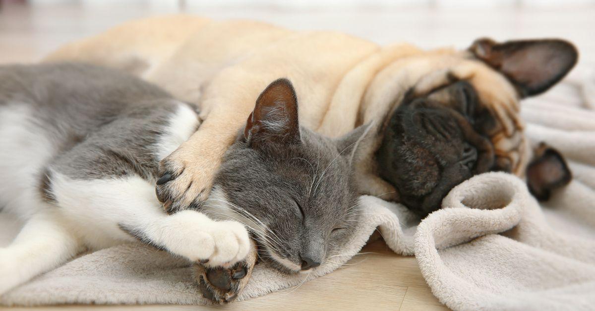 Wypadanie sierści u psa i kota - jak sobie radzić?